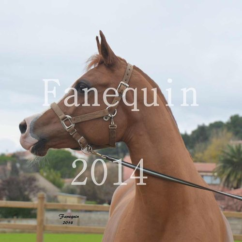 Photographe - FANEQUIN PHOTOGRAPHIES - photo 73