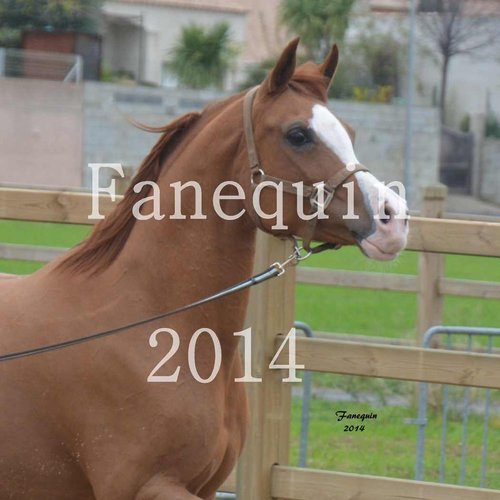 Photographe - FANEQUIN PHOTOGRAPHIES - photo 85